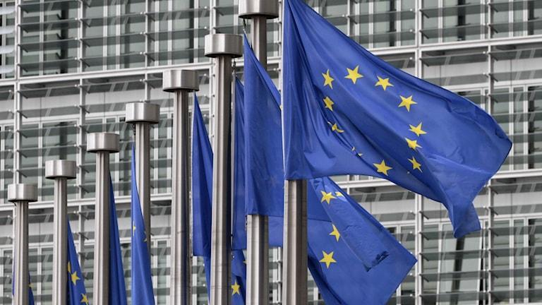 EU-flaggor som fladdrar