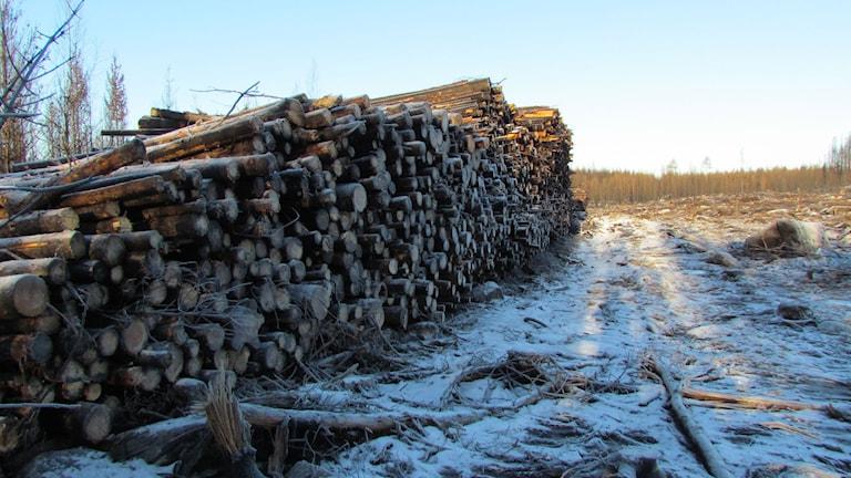 Skogsavverkning. Foto: Erika Mårtensson/Sveriges Radio
