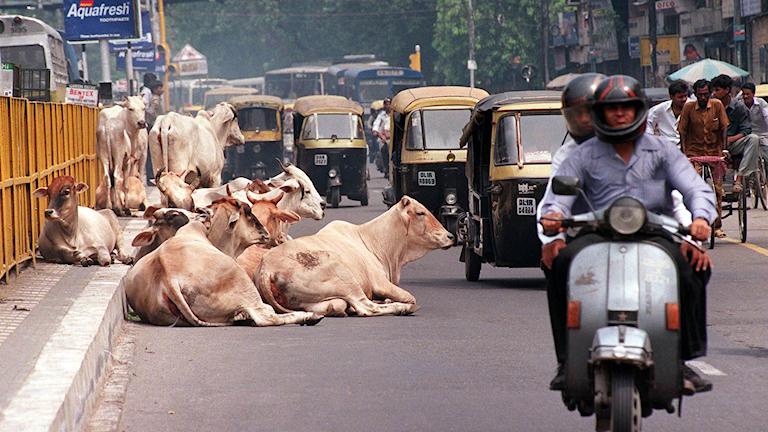 Trots stora miljöproblem har klimatfrågan inte blivit stor i valet i Indien
