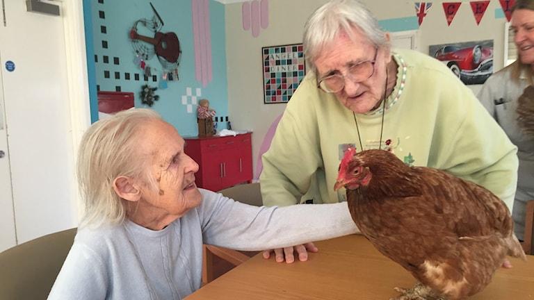 Jag tycker om att vara med hönsen, säger dementa 90-åriga Dorothy Marsh i Gateshead och 84-åriga väninnan Elsie Moorey uppskattar att mata dem och plocka ägg.