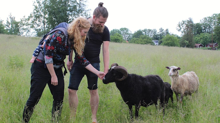 Belinda och Erik Neander hälsar på fåren i hagen.