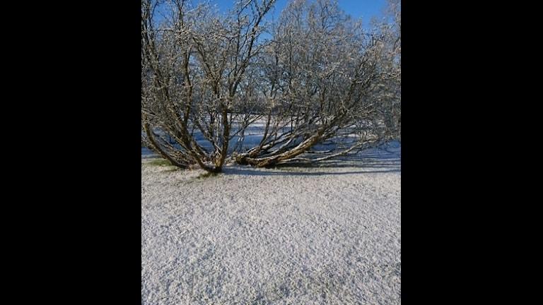 Den långsamma våren i Rockneby utanför Kalmar.