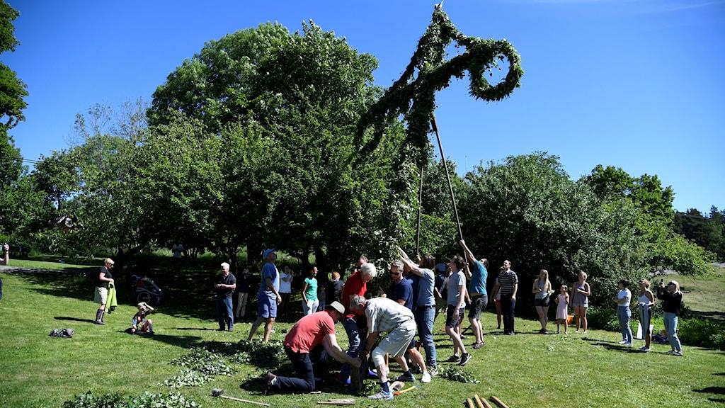 Folks lifting a Midsommar maypole.