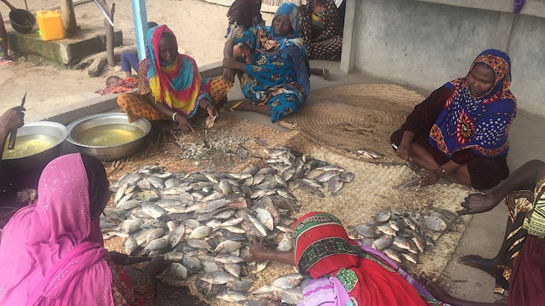 Fiskebyn vid Tchadsjöns strand har tagit emot flera familjer som flytt från Boko Harams terror ute på öarna i sjön.