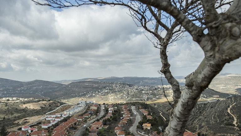Bosättning på Västbanken med ett träd i förgrunden.