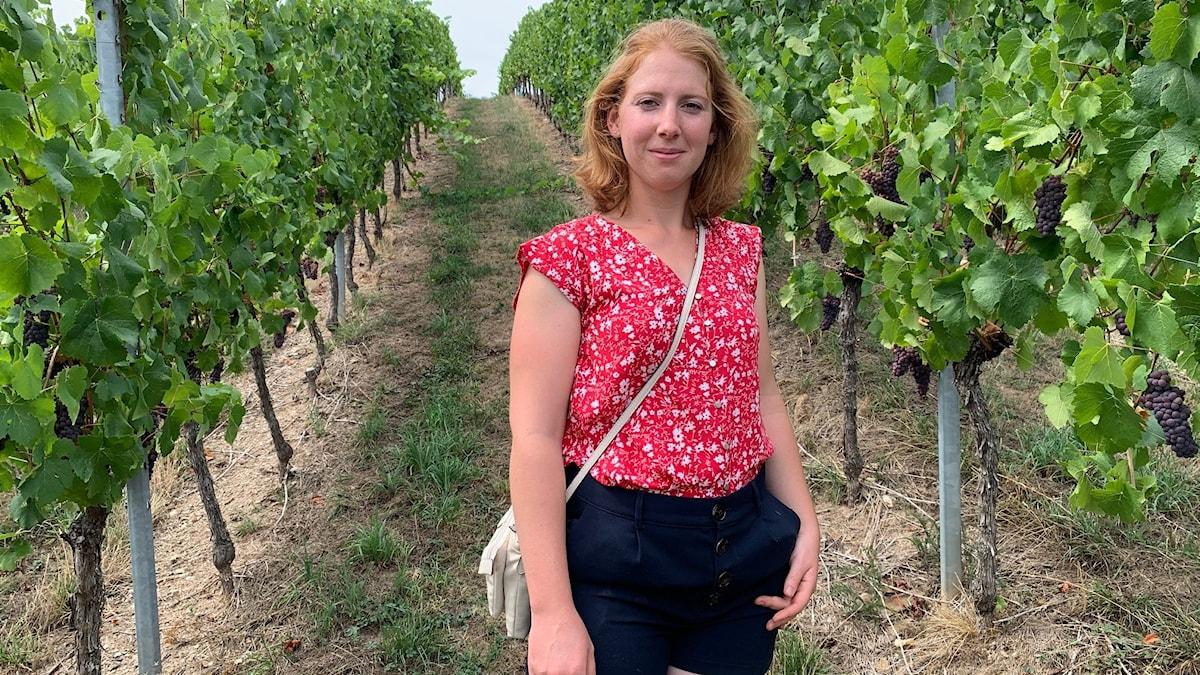 Marion Borés väntar på att få skörda druvorna i september.