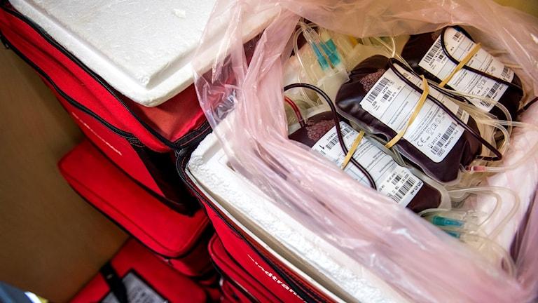 blod ligger i påsar i en kylväska