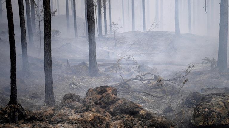 Skogsbranden i Västmanland 2014.