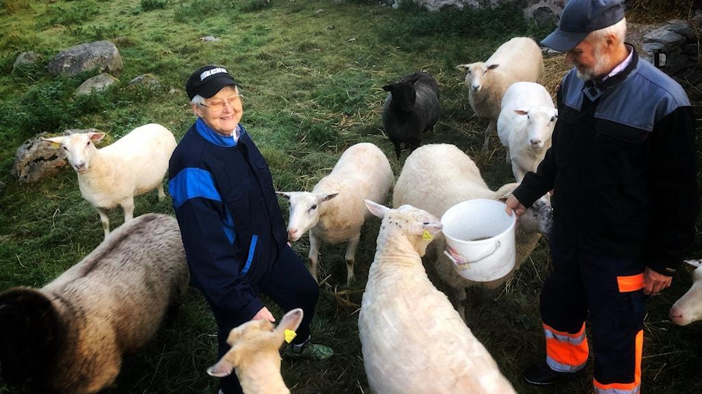 En kvinna och en man står bland får.