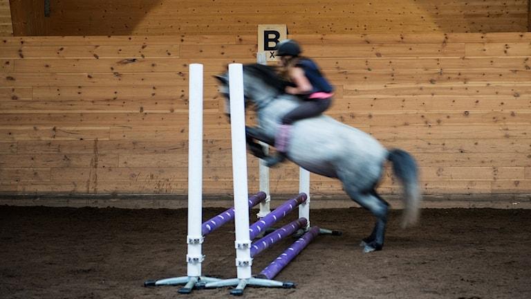 en ryttar på en häst hoppar över ett hinder, interiör