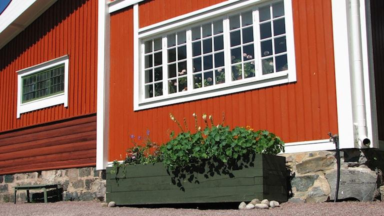 Odlingslåda av trä på Carl Larsson-gården. Foto Gustaf Klarin/SR
