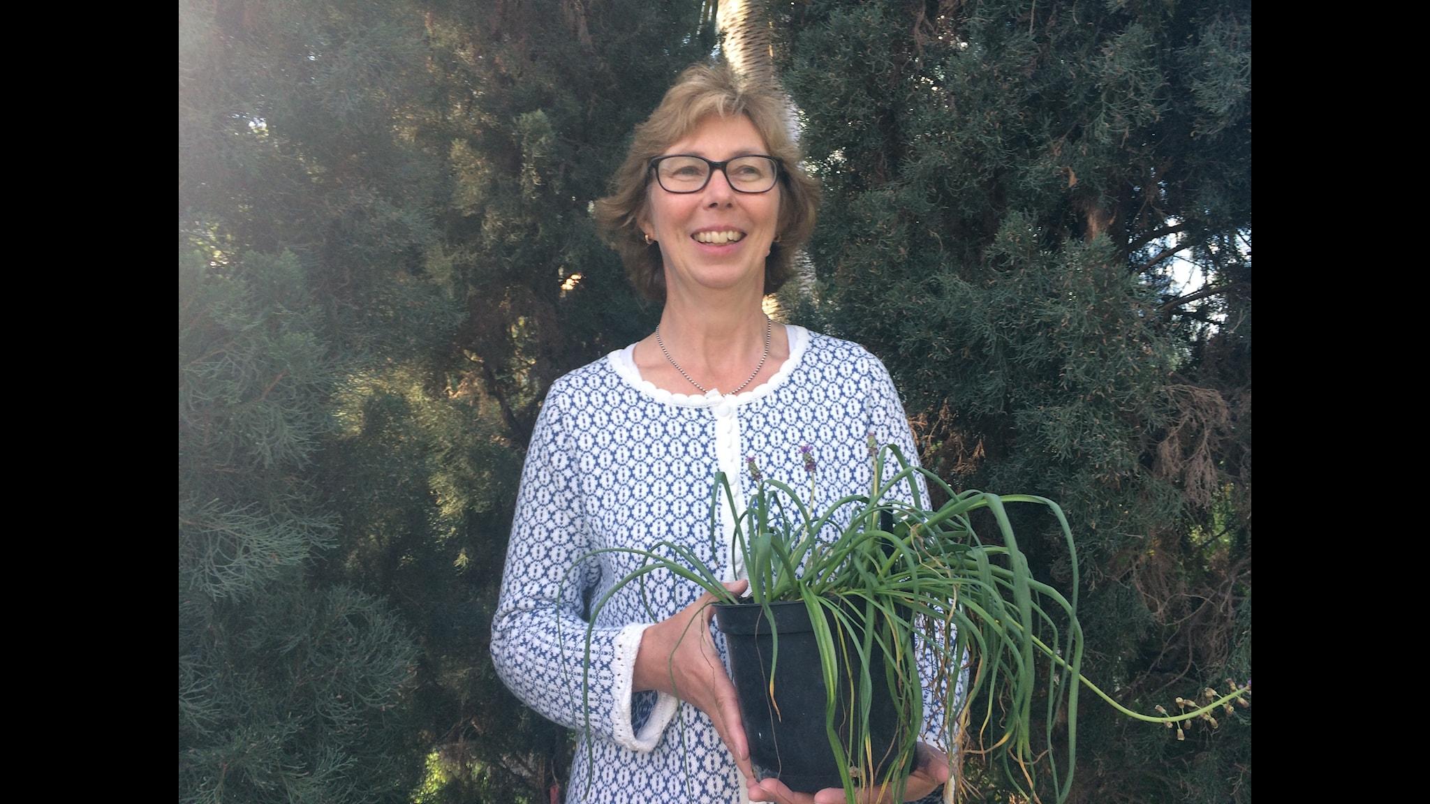 Karin Martinsson med fjäderhyacint framför pelarcypress. Foto: Ulla de Verdier/SR
