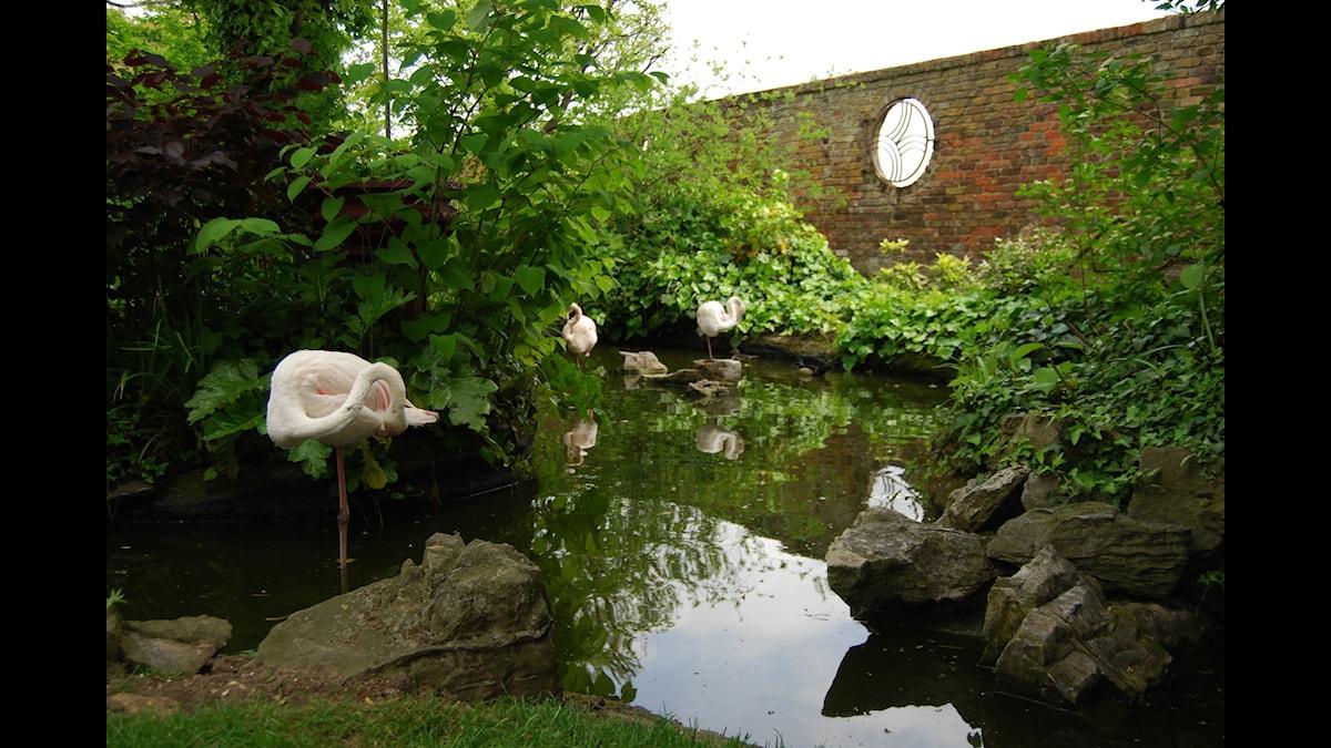 Flamingos i Enlish Woodland Kensington Rooftop Gardens