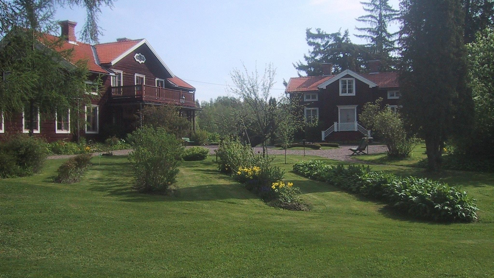 Faluröda hus och trädgård med rabatter och gräsmatta