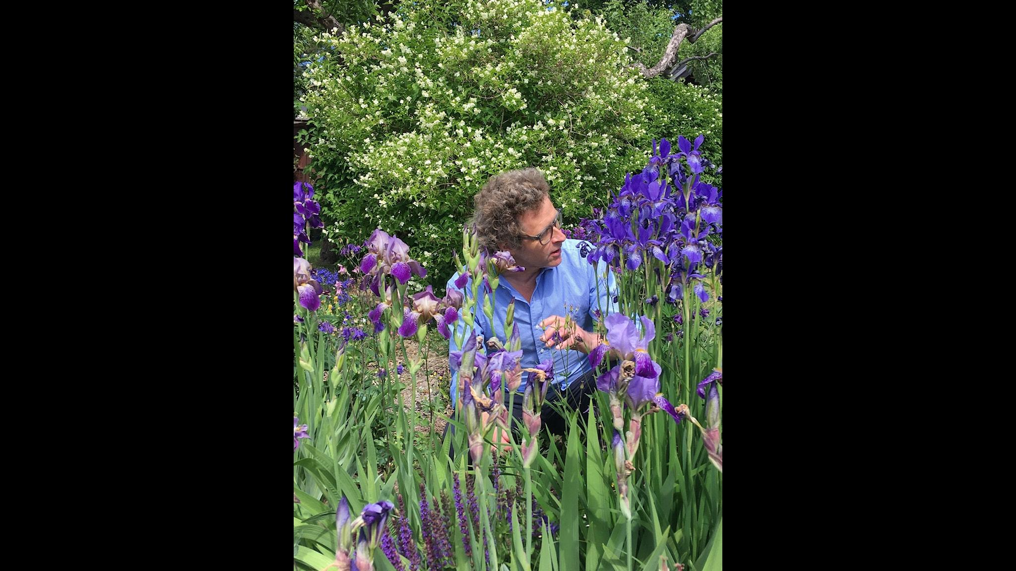 En iris kan bli många och fler invasiva växter kan förbjudas