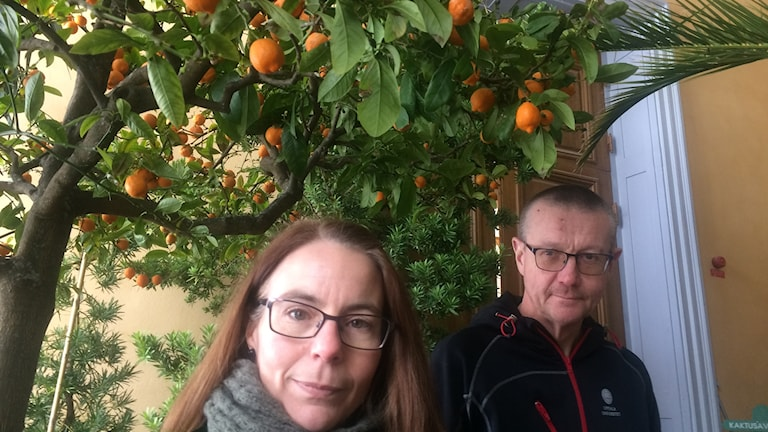 Småplantorna skolas om och citrusträden fås att blomma