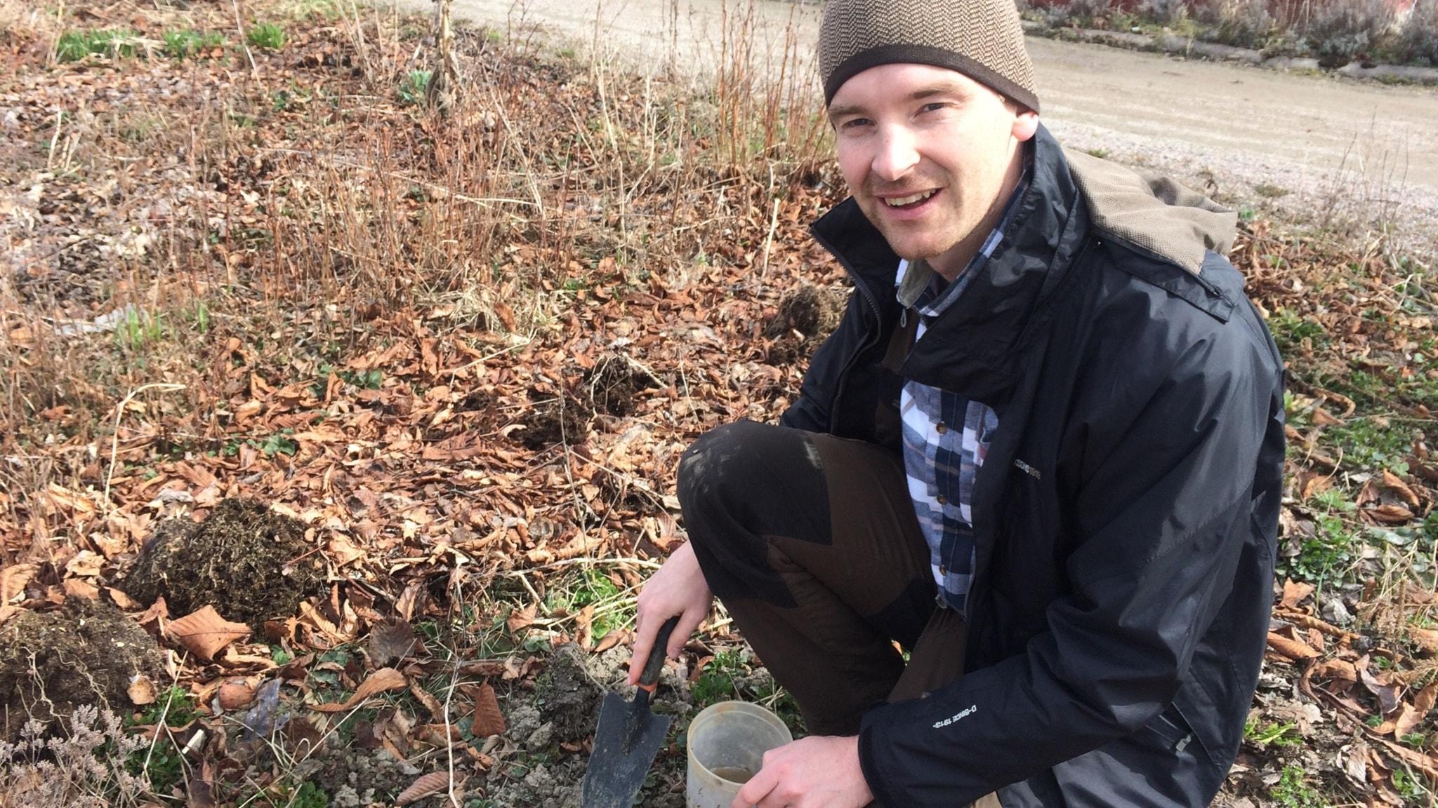 Fler tulpaner och färre jordloppor