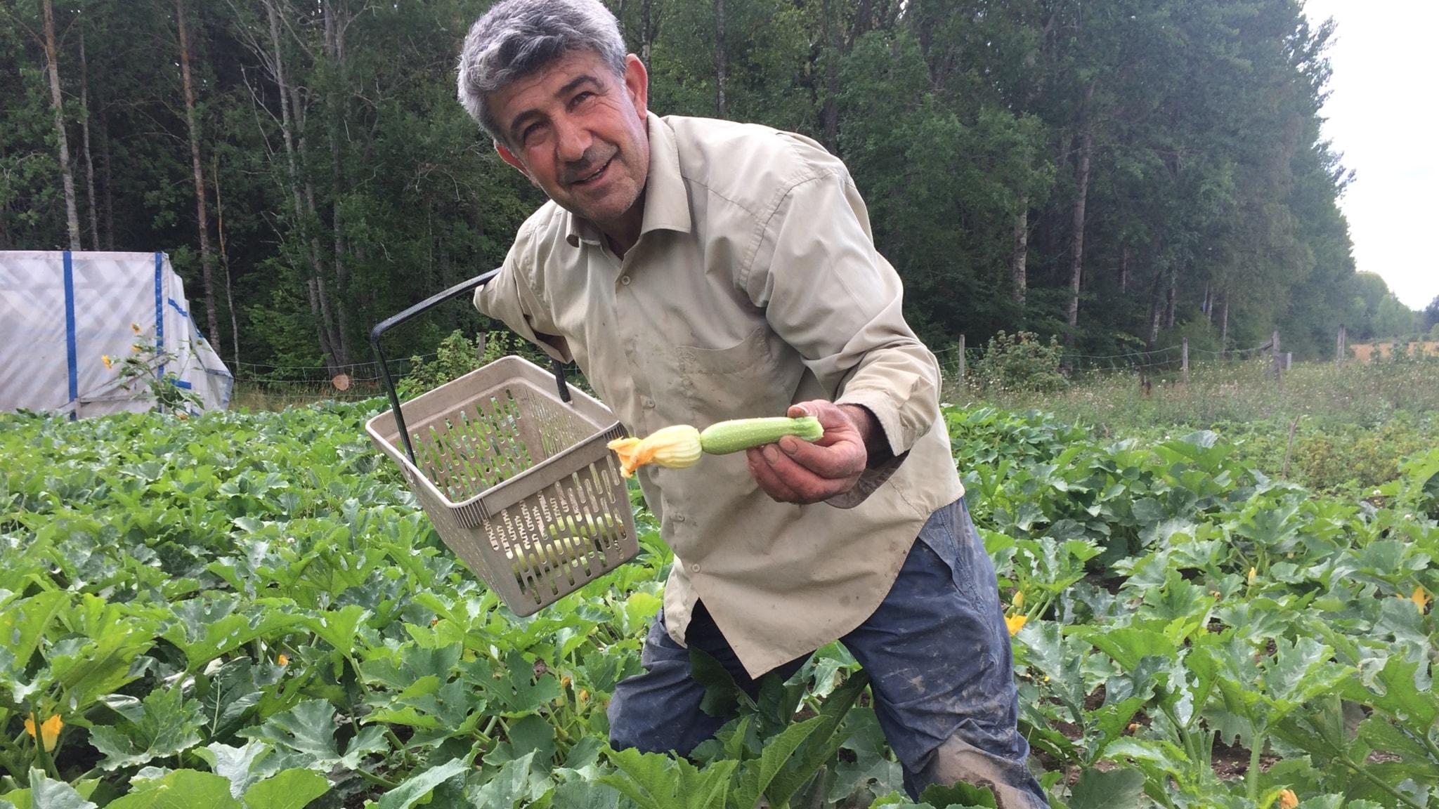 Dela pioner och älska sitt grönsaksland