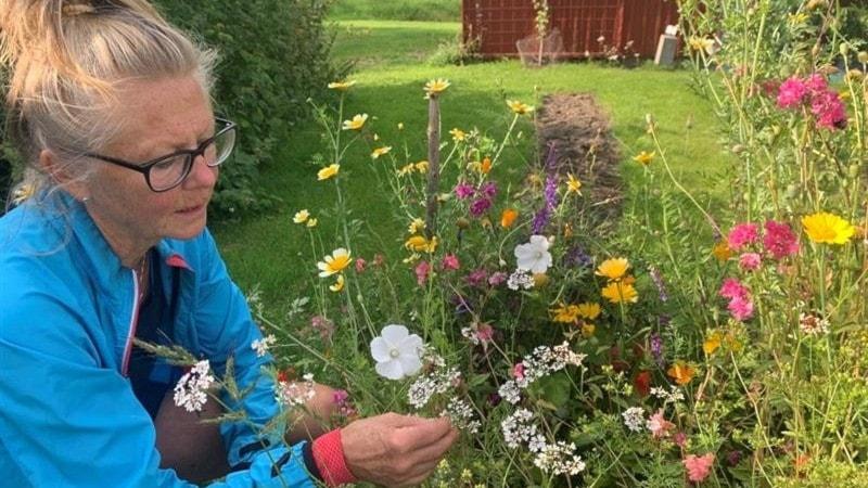 Blommor i grönsakslandet och Åretruntträdgård