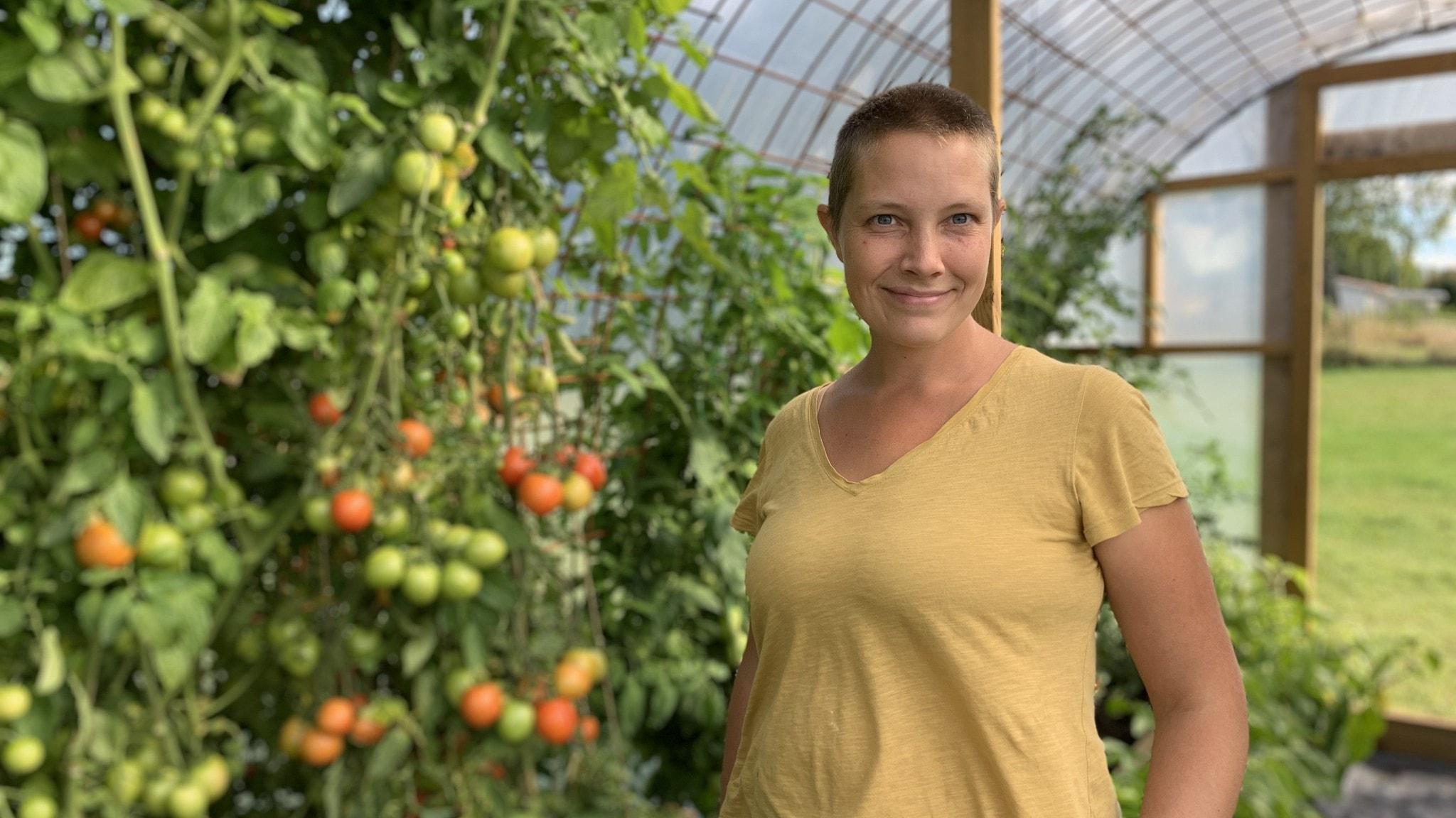 Maria Palmqvist står vid tomatplantor som dignar av frukt i ett bågformat växthus med ett böjt armeringsjärn som följer väggen