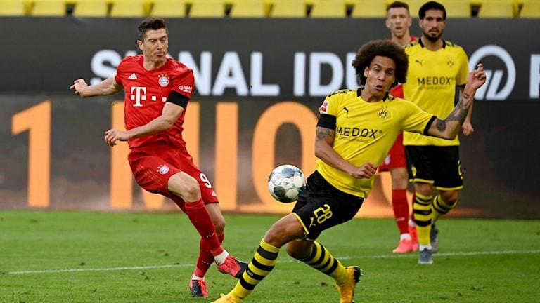 Robert Lewandowski under matchen borta mot Dortmund.
