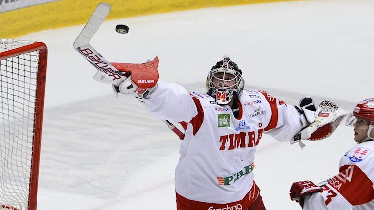 Timrå (he)