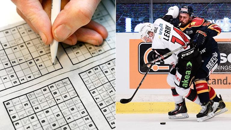 Suduko och hockeyns hjärnskaningar. Foto: TT