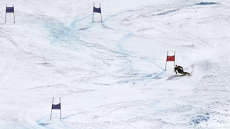 Alpint 2013 genrebild