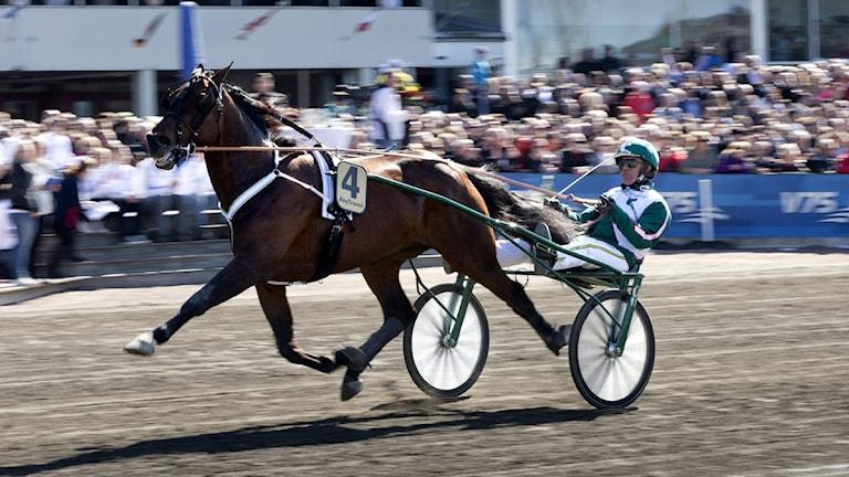 2013 Kusken Örjan Kihlström med Maharajah vann finalen i Olympiatravet på Åby på lördagen. Foto: Björn Larsson Rosvall / SCANPIX