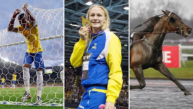 Brasiliens Fernandinho, Sarah Sjöström och Maharajah. Foto: TT. Collage: Radiosporten.