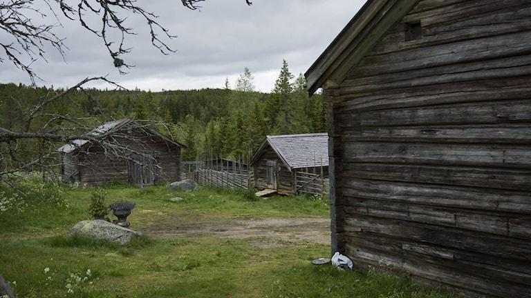 Fädbodvallar i Hälsingland. Foto: Markus Dahlberg / TT