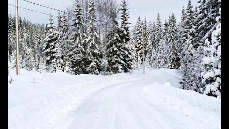 En snöbild från sträckan SS10/14 av Svenska Rallyt. Foto: Foto: Twitter @MickeLindh