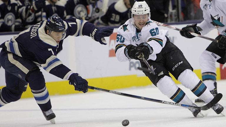San Jose Sharks Chris Tierney till höger, i kamp om pucken med Columbus Jack Johnson. Foto: AP Photo/Jay LaPrete/TT