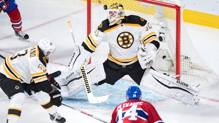 Jonas Gustavsson i Bruins-kassen. Foto: Paul Chiasson/The Canadian Press via AP/TT
