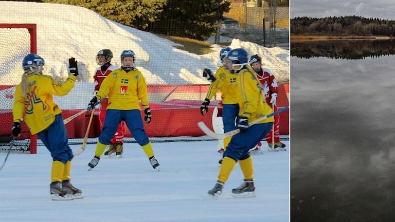 Bandy, svenska damlandslaget och natur-is