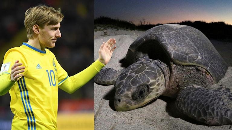 """""""Vitrysslands målvakt ser ut som världens ledsnaste sköldpadda"""""""