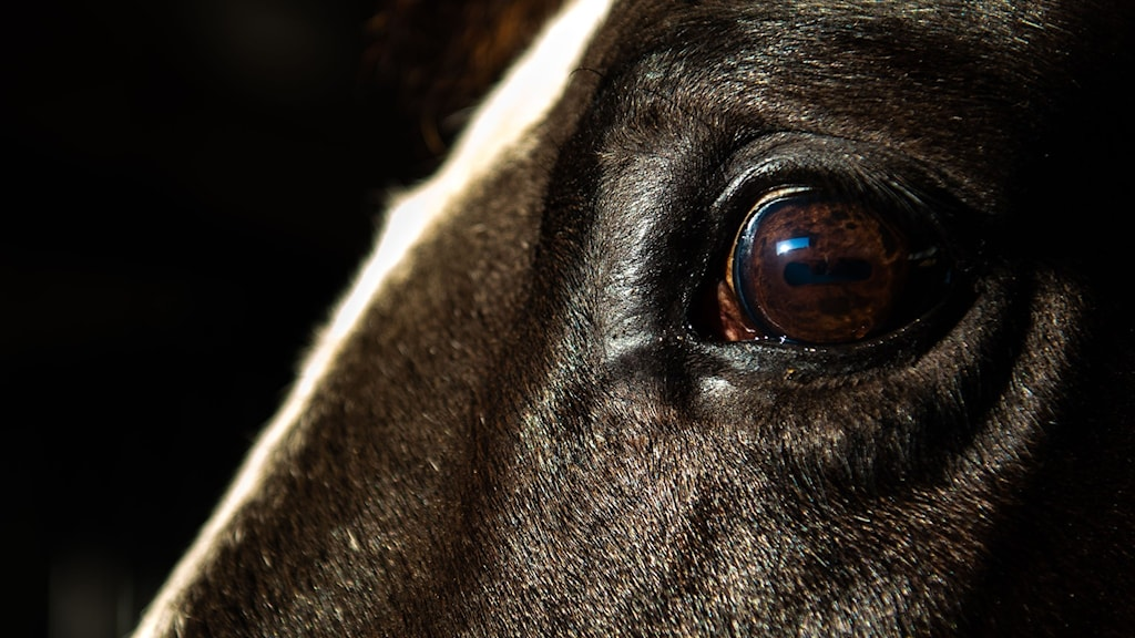 Häst.