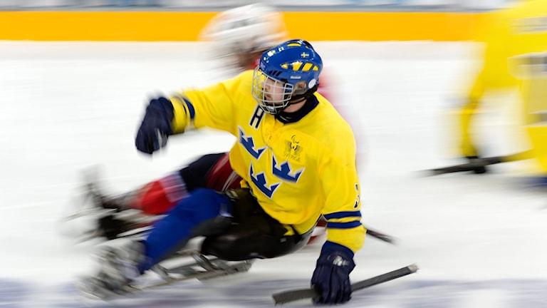 Arkivbild. SOTJI 20140311 Sveriges andrekapten Marcus Holm i gruppspelsmatchen i kälkhockey mellan Sverige och Norge i Paralympics 2014 i Sotji, Ryssland. Sverige förlorade matchen med 0-2. Foto: Vilhelm Stokstad / TT