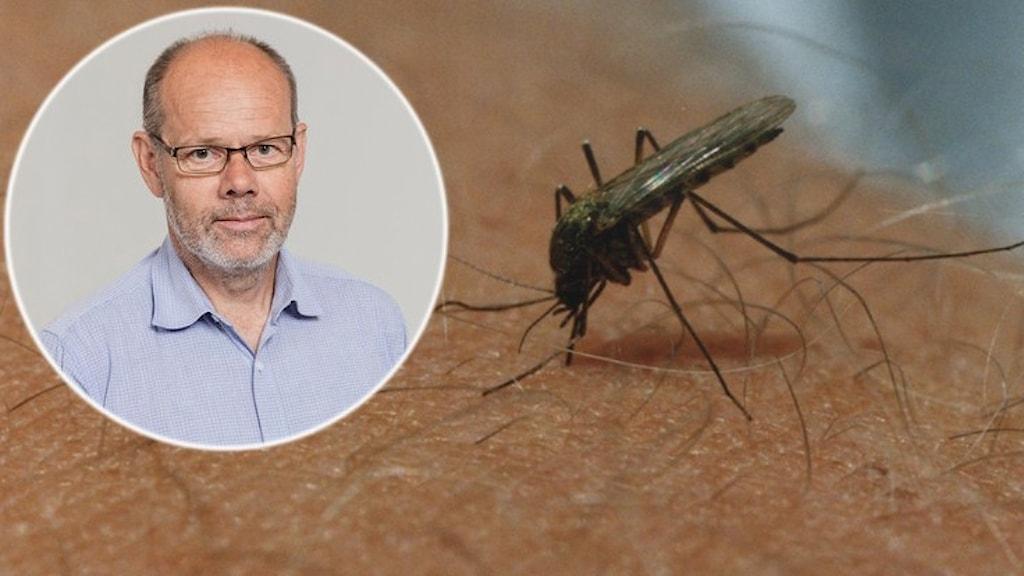 Groda: Dagge får en mygga i halsen