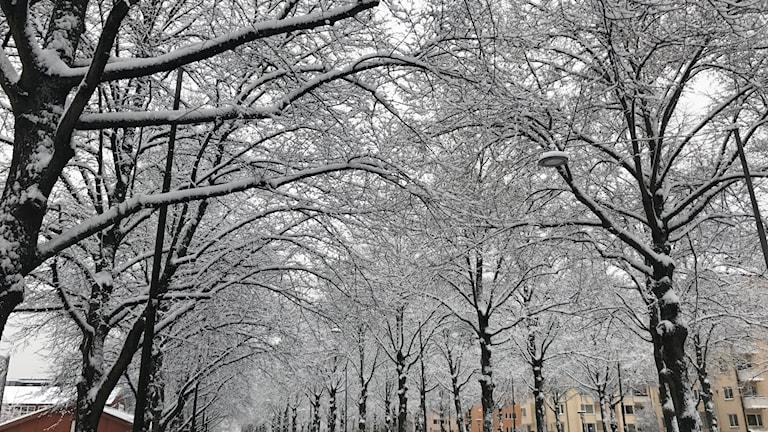Talvi, lumi