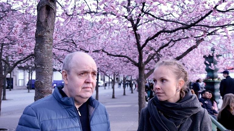 Keijo Knutas ja Hanna Hallakumpu seisoo kirsikkapuiden alla Kungsträdgårdenissa.