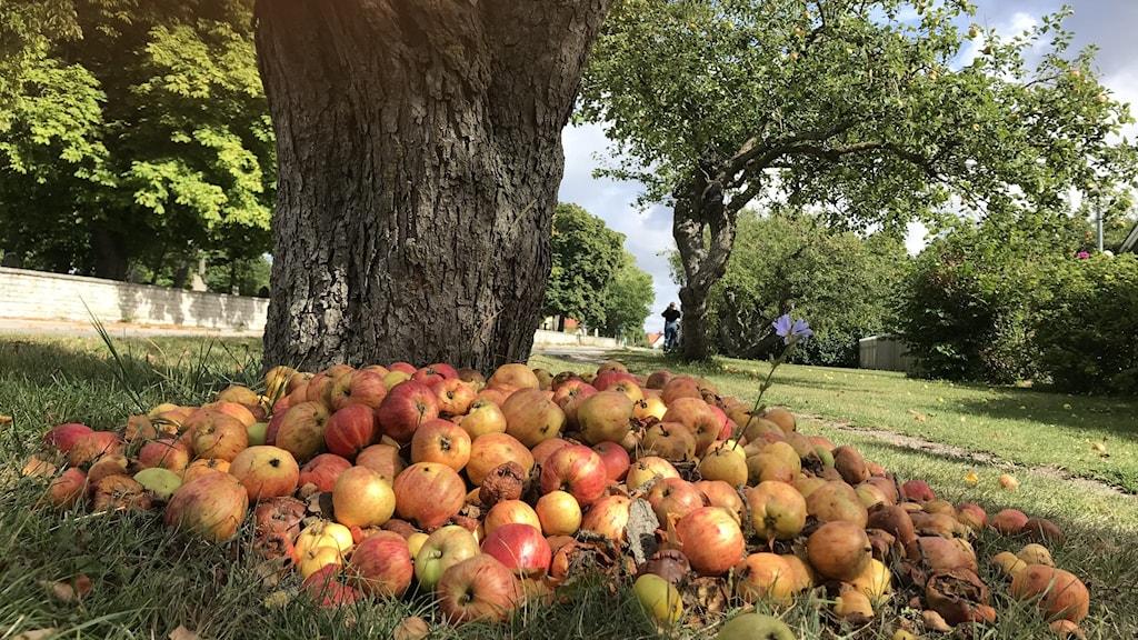 Äpplen i en hög på marken
