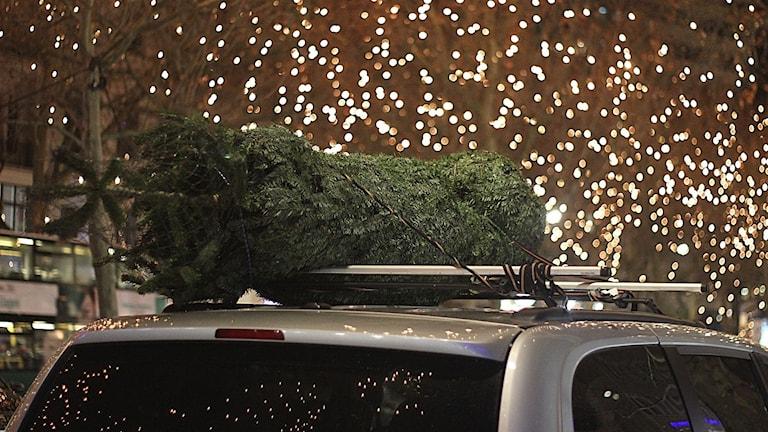 Julgran på biltak