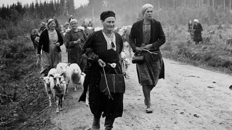 FINLAND 1944 - Evakuering av Karelen och Porkala under fortsättningskriget mellan Finland och Sovjetunionen