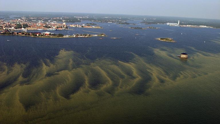 Leväkukintoja Itämerellä