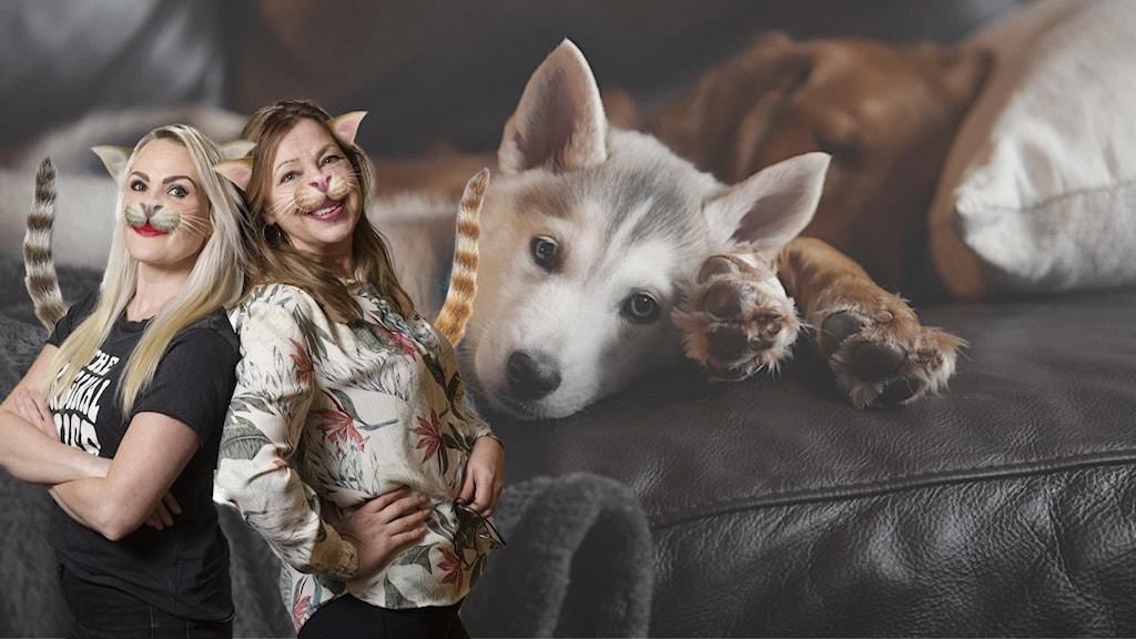 Programledarna är photoshoppade till katter och står framför en soffa med hundar