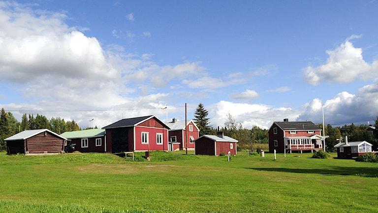 Kesäinen maalaismaisema Pajalassa, jossa on punaisia puutaloja vieretyksin.