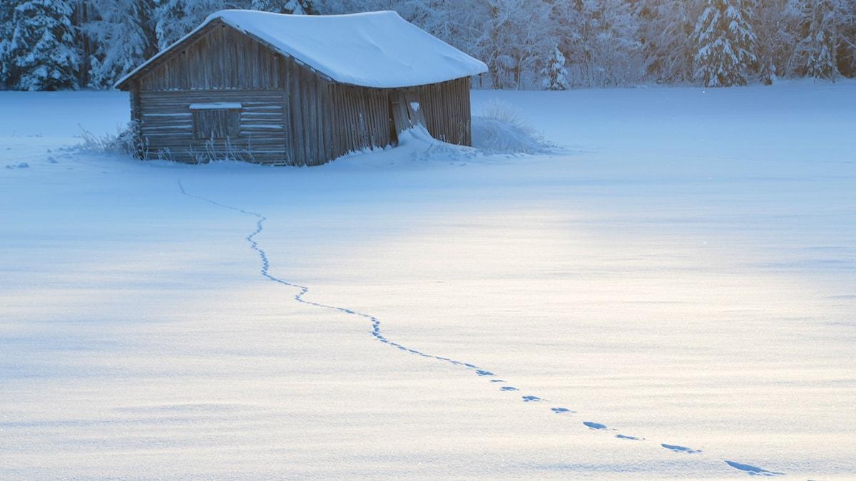 Luminen talo