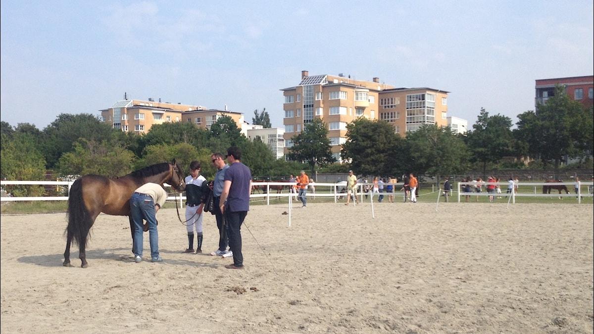 Ennen kilpailua eläinlääkäri tarkistaa ponien kunnon. Kuva: Sanna-Leena Rinne/SR Sisuradio