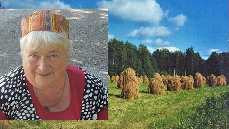 Manja Lehto ja heinäseipäät, Kuva: Manja Lehto